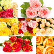 Beautiful roses collage — Stock Photo #45903937