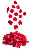 美丽的白色上孤立的红玫瑰花瓣 — 图库照片