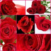 Vackra rosor collage, nära upp — Stockfoto