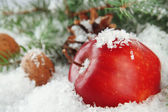Red apple with fir branches and bumps in snow close up — Foto Stock