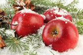 Red apples with fir branches and bumps in snow close up — Stock Photo