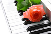 Background of synthesizer keyboard with rose — Stock Photo
