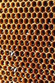 Gele mooie honingraat met honing, achtergrond — Stok fotoğraf