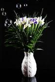 Beautiful irises on black background — Stock Photo