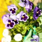 Gardening concept: beautiful flowers in garden with sun light — Stock Photo #46202391