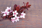 Blooming tree branch with pink flowers on wooden background — Stock Photo