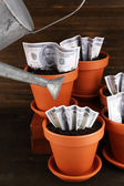 Business concept: growing money in the flowerpots on table — Stock Photo
