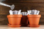 бизнес-концепция: рост деньги в кашпо на столе — Стоковое фото