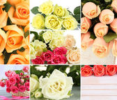 όμορφα τριαντάφυλλα κολάζ, κοντά επάνω — Φωτογραφία Αρχείου