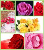 美丽的玫瑰拼贴画 — 图库照片