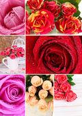 美丽的玫瑰拼贴画,关闭了 — 图库照片