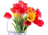 Coloridos tulipanes en regadera aislado en blanco — Foto de Stock