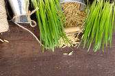 Green grass in flowerpots and oat seeds, on wooden background — Стоковое фото