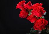 Piękne róże — Zdjęcie stockowe