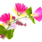 Постер, плакат: Branch of petals