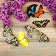 Beautiful butterflies and lilac flowers, on wooden background — Stock Photo #46314093