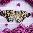 Beautiful butterfly and lilac flowers, on wooden background — Stock Photo #46314121