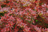 Spring leaves on shrub — Stockfoto