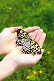 Beautiful butterfly on hands — Stock Photo