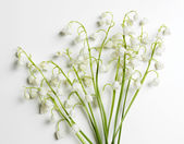 Beautiful lilies of the valley, isolated on white — Zdjęcie stockowe