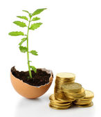 Coins and plant in eggshell isolated on white — Stock Photo