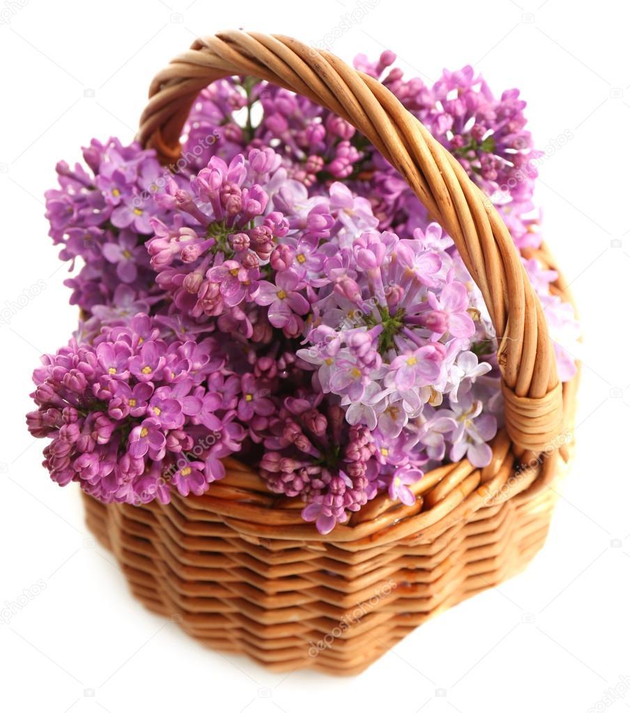 Panier De Fleurs Fraîches : Belles fleurs lilas en panier d osier isol?s sur blanc
