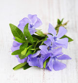 Beautiful periwinkle flowers on wooden table — Stock Photo