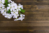 Beautiful fruit blossom on wooden background — Stock Photo
