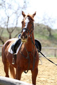Purebred horse on nature background — Stock Photo