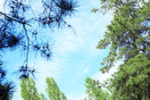 Blue sky with clouds in the forest — Stock Photo