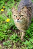 屋外の美しい春の草 — ストック写真