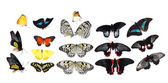 美しい蝶 — ストック写真