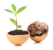 Reen plant in eggshell — Stock Photo