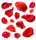 Beautiful red rose petals, isolated on white — 图库照片