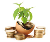 Coins and plant in eggshell isolated on white — Foto de Stock