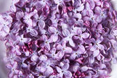 Beautiful lilac flowers on white plate on color tablecloth background — Stock Photo