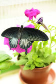 Beautiful butterfly sitting on flower outdoors — Stock Photo