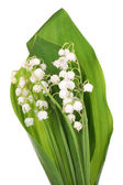 Beautiful lilies of the valley, isolated on white — Stock Photo