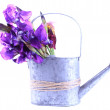 Purple iris flowers in watering can, isolated on white — Stock Photo #46542731