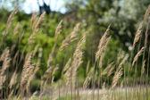 Beautiful grass, outdoors — Stock Photo