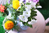 Flowers in  decorative pots on chair, close-up — Stock Photo