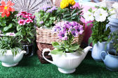 Flowers in  decorative pots and garden tools on green grass background — Stock Photo