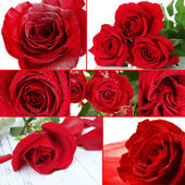 Beautiful roses collage, close up — Stock Photo