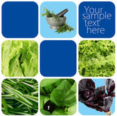 Collage of healthy herbs — Stock Photo