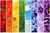 Collage of beautiful flowers, grass and sky — Stock Photo
