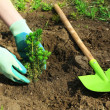 Gardener planting tree in spring — Stock Photo #46604055