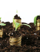 Business concept: golden coins in soil with young plants, isolated on white — 图库照片