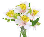 Alstroemeria flowers in vase isolated on white — Stock Photo