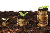 Business concept: golden coins in soil with young plants — Stock Photo
