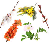 Collage of spring blooming twigs isolated on white — Stock Photo